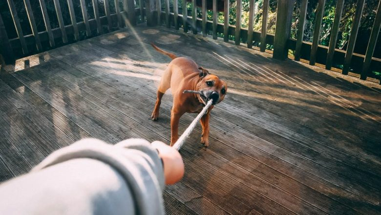 Dog Bites and Knowing Your Rights If You've Been Bitten
